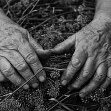 Image description: Black and white image shows an elderly persons hands on a lap