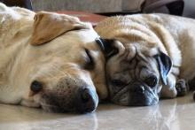 Two dogs sleeping on the floor